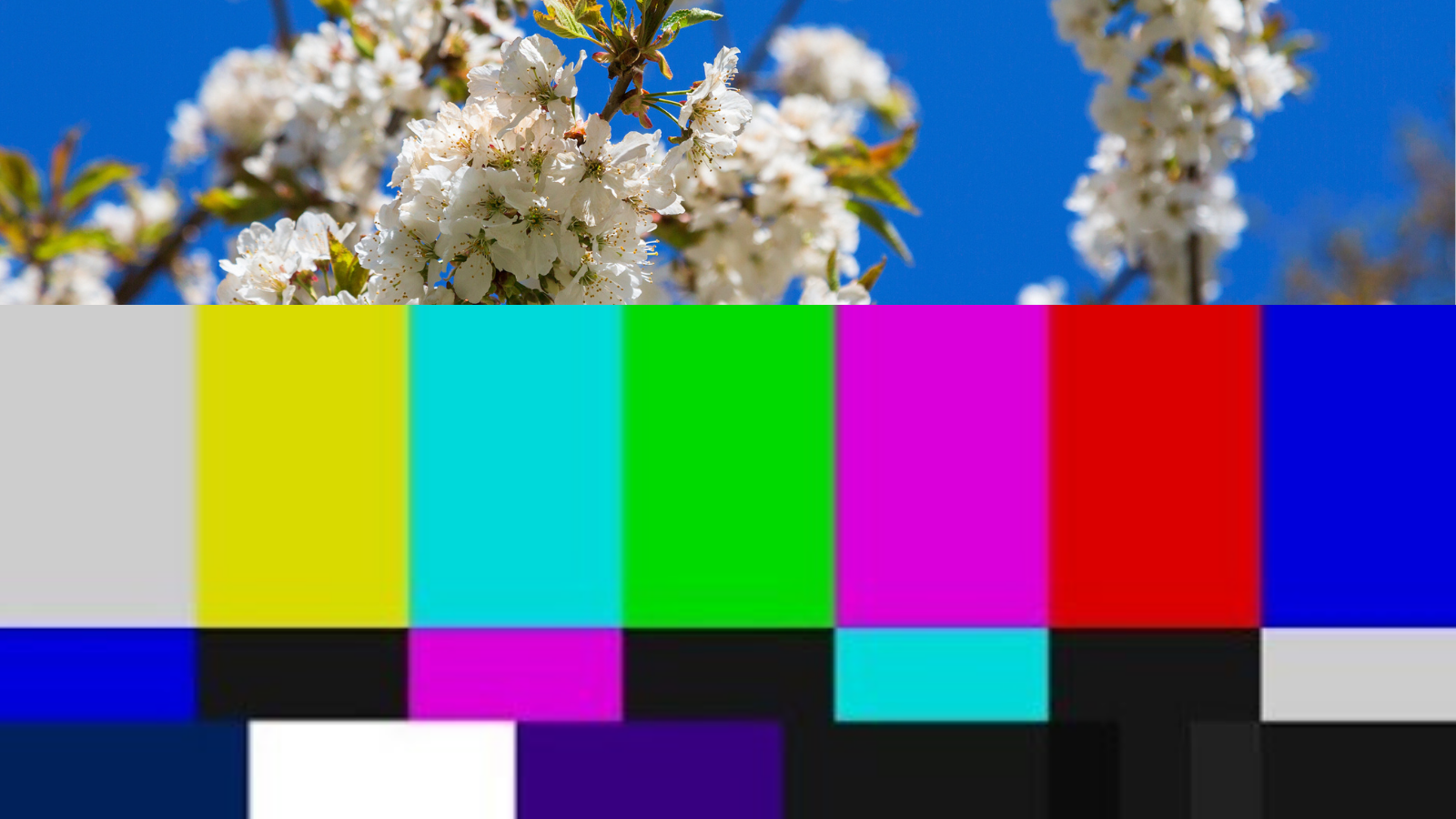 This collage image includes white flowers against a blue sky in the top 1/3, and a SMPTE color bars test pattern used to test television signals.